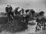 Mussel Catch