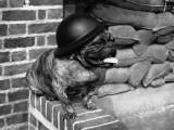 Dog Warden