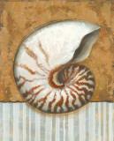 Vintage Shell I