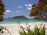 Pohutukawa Tree in Bloom and Hahei, Coromandel Peninsula, North Island, New Zealand Papier Photo par David Wall