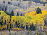 Gunnison National Forest  Colorado  USA