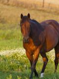Horse in Pasture Near Pullman  Washington  USA