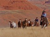 Cowboys Herding Horses in the Big Horn Mountains  Shell  Wyoming  USA
