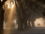 Boys Walking in Early Morning Fog at Bethesda  Savannah  Georgia  USA
