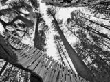Mountain Biker on Malice in Plunderland Trail  Spencer Mountain  Whitefish  Montana  USA