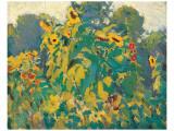 Sunflowers  Thornhill