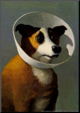 Chien à collerette Reproduction montée par Michael Sowa