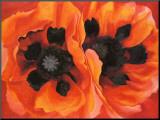 Oriental Poppies  1928