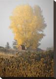 Yellow Tree and Teasel Tableau sur toile par David Winston
