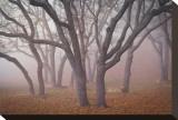 Pilot Road Trees Tableau sur toile par David Winston