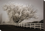 Frosted Tree and Fence Tableau sur toile par David Winston