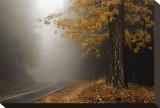 Yellow Leaves in Fog Tableau sur toile par David Winston