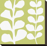 White Fern on Green
