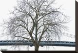 Manhattan Bridge Span with Tree
