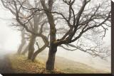 Early Morning Calm Tableau sur toile par David Winston