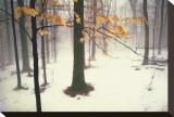 Bois tranquille Tableau sur toile par David Winston