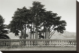 Cypress Trees and Balusters