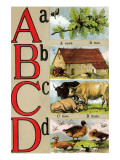 A  B  C  D Illustrated Letters