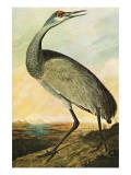 Sandhill Crane Reproduction d'art par John James Audubon