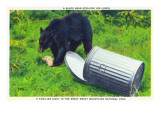 Great Smoky Mts Nat'l Park  TN - Black Bear Stealing Lunch from Trashcan