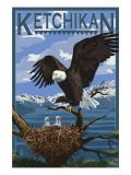 Bald Eagle & Chicks - Ketchikan  Alaska
