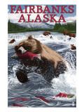 Grizzly Fishing Salmon - Fairbanks  AK