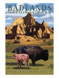 Badlands National Park  South Dakota - Bison Scene