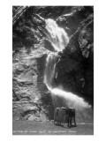 Colorado Springs  Colorado - South Cheyenne Canyon; Burro at Seven Falls