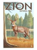 Zion National Park  UT - Deer