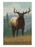Jackson Hole  Wyoming - Elk
