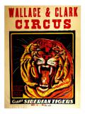 Wallace & Clark Cirbus - Giant Siberian Tigers Poster  Circa 1945