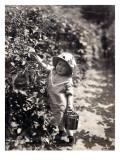 Kirkland Berry Farms  Baby Berry Picker  Undated