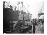 Loading Apple Cargo at Dock  Seattle  1921