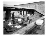 Icing Cars  Cold Storage Plant at Zillah  1915