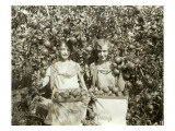 Girls with Apple Harvest  Yakima  1928