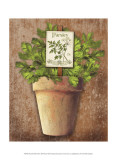 Potted Herbs III