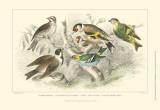 Goldfinch  Buntings & Wrens