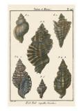 Triton Shell pl 415