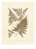 Sepia Ferns VI