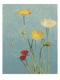 Non-Embellished Poppies I