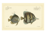 Bloch Antique Fish III