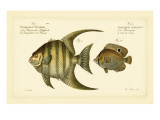 Bloch Antique Fish VI