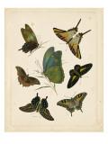 Antique Entomology I