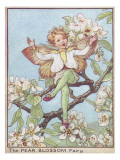The Pear Blossom Fairy