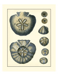 Antique Blue Sanddollar