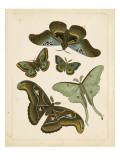 Antique Entomology II
