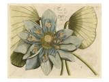 Blue Lotus Flower I