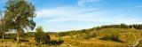Trees on Hills  Little Round Top  Gettysburg  Adams County  Pennsylvania  USA