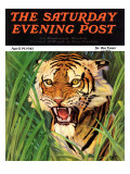 """Snarling Tiger "" Saturday Evening Post Cover  April 19  1941"