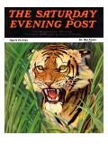 """Snarling Tiger "" Saturday Evening Post Cover  April 19  1941"